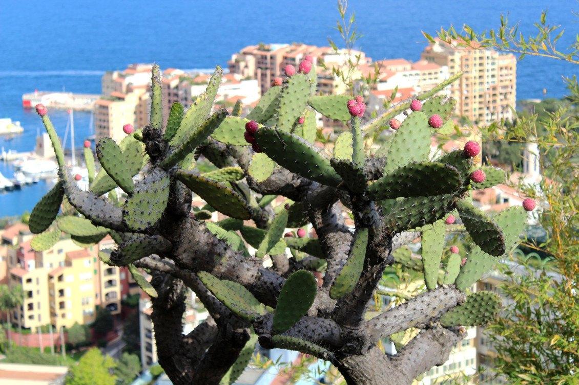 Monaco et son jardin exotique