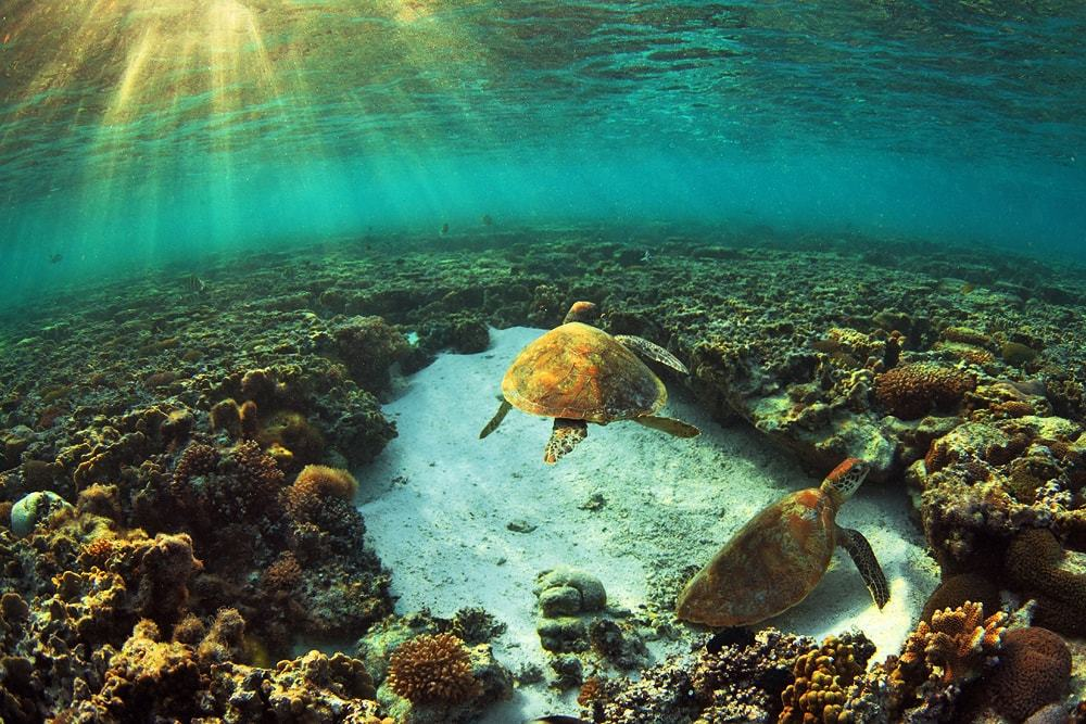 Plonger sur Lady Elliot island