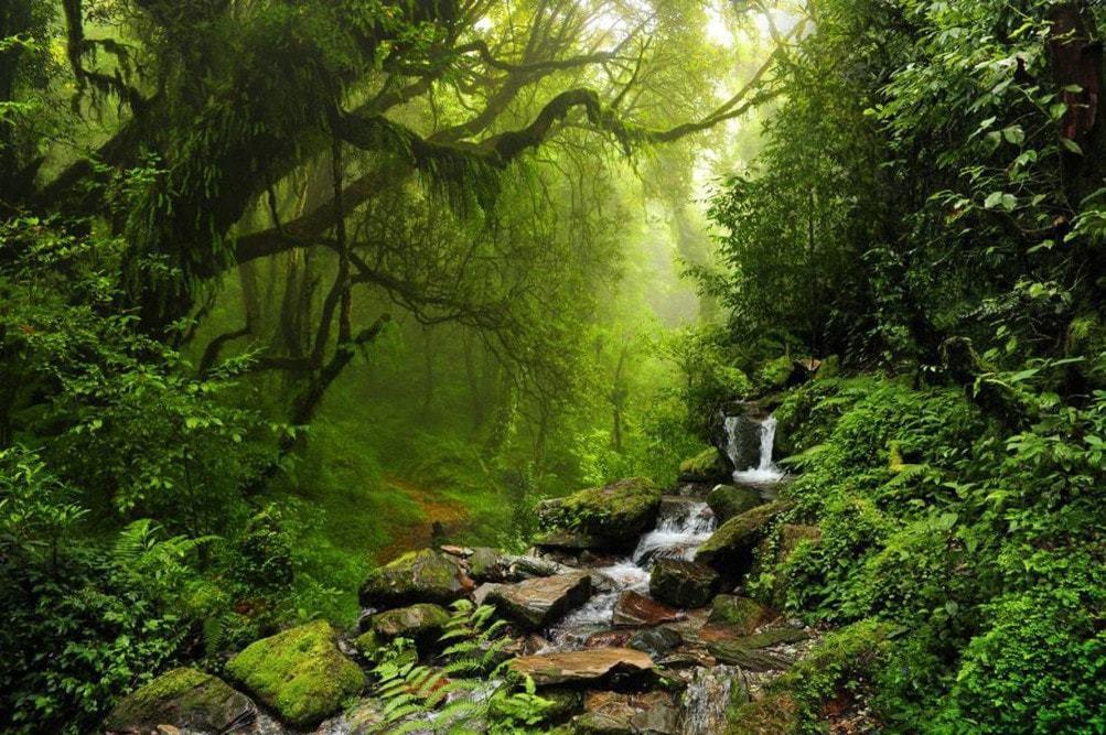 Randonner et dormir dans la forêt de Daintree