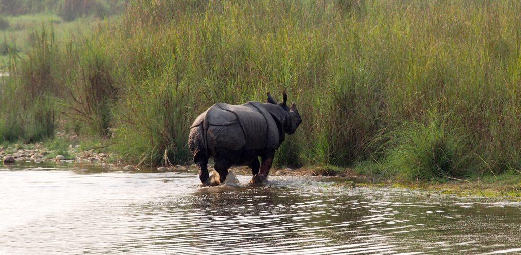 Incroyable rencontre avec un rhinocéros