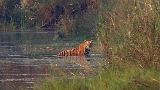 Sunshine blogger award - rencontrer le tigre sauvage au Népal