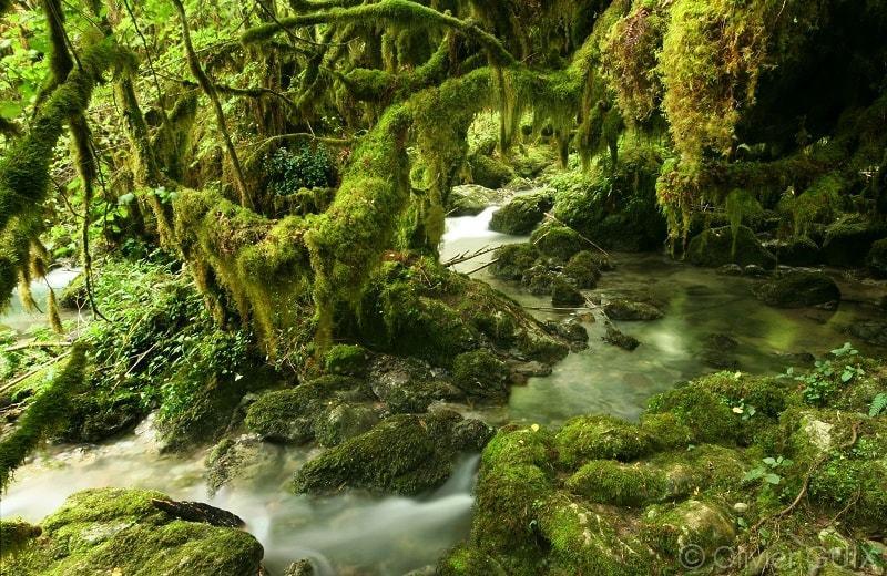La petite forêt Amazonienne en France - les plus beaux paysages du monde observables en France