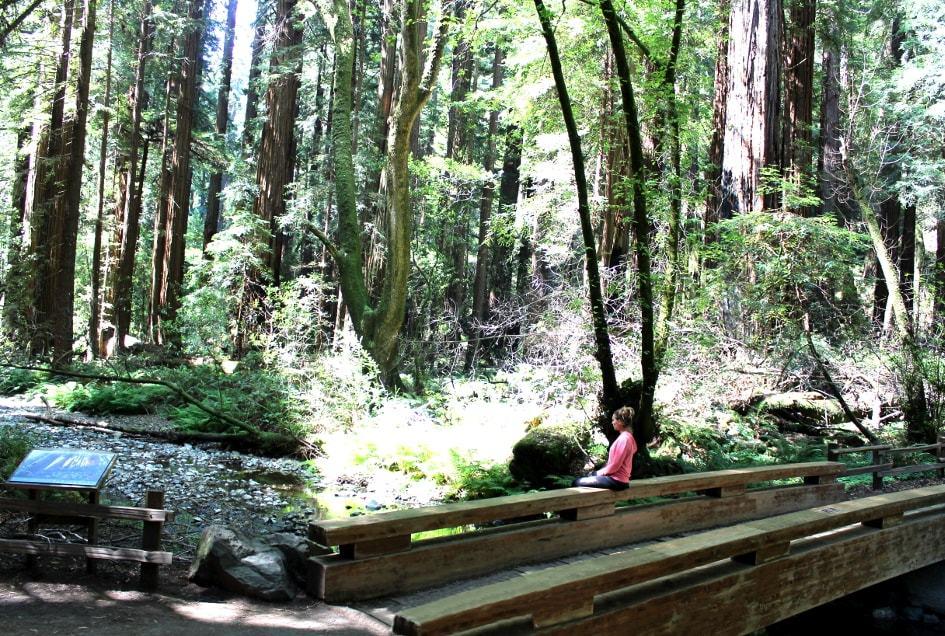 Pont dans le bois de Muir Woods à San Francisco_Californie