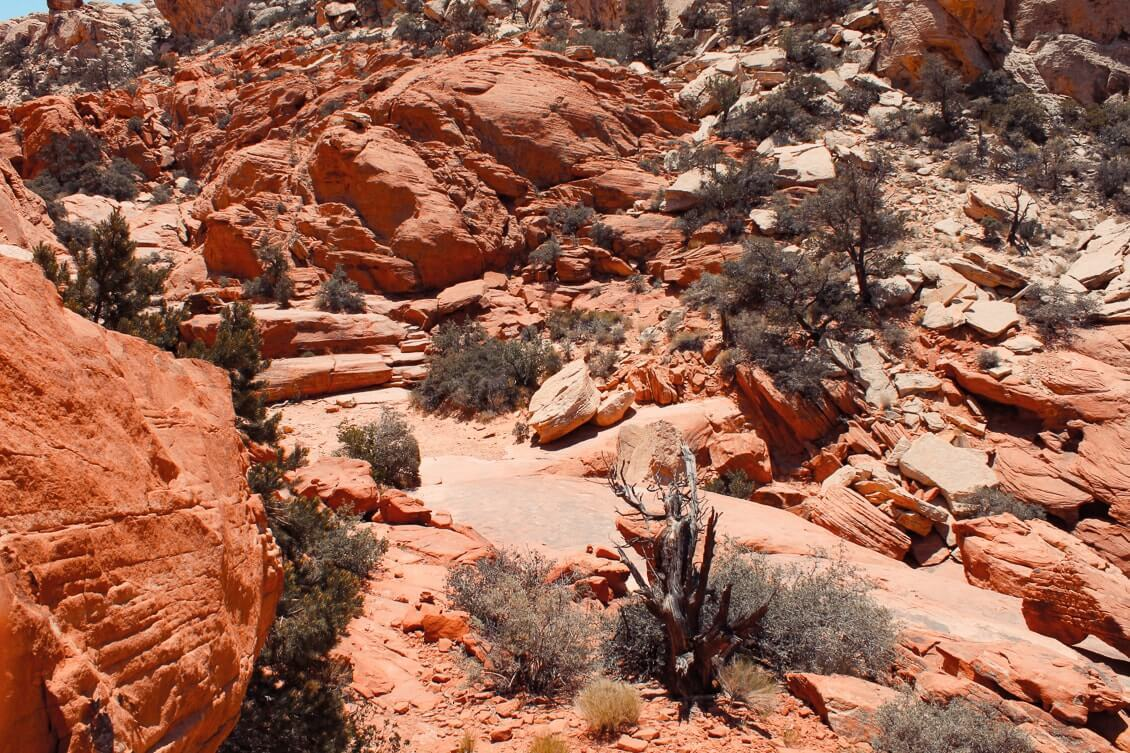 Canyons-autour-de-Las-Vegas-red-rock-canyon