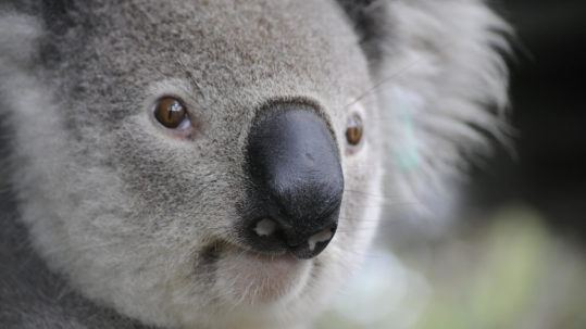 Bucket_list_Australie_30_experiences_incroyables_c