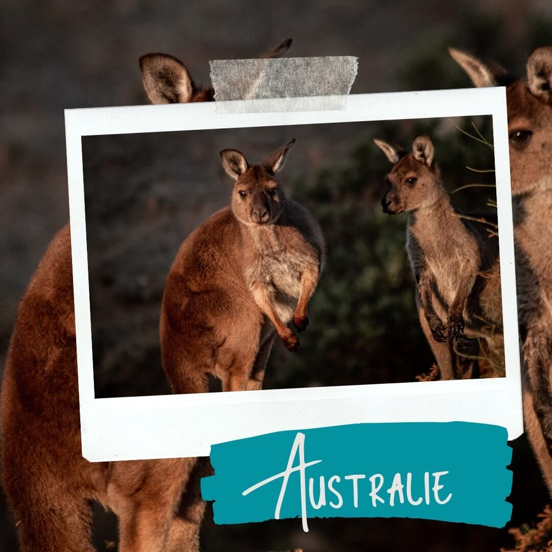 Du soleil dans les poches bucket list Australie