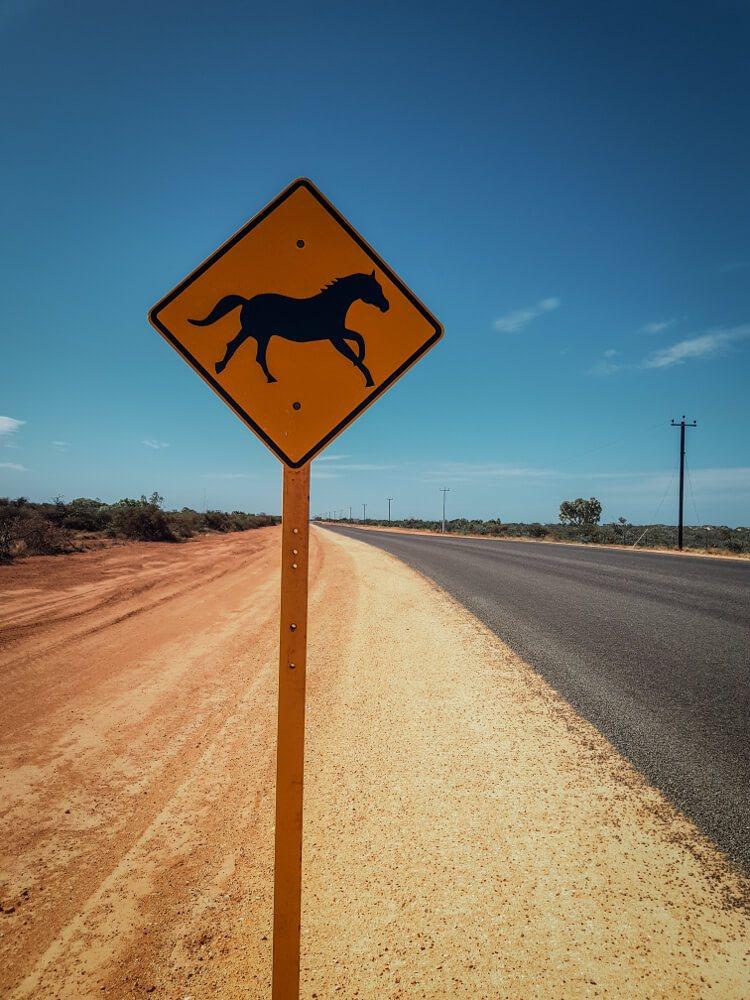 Panneaux d'Australie les chevaux