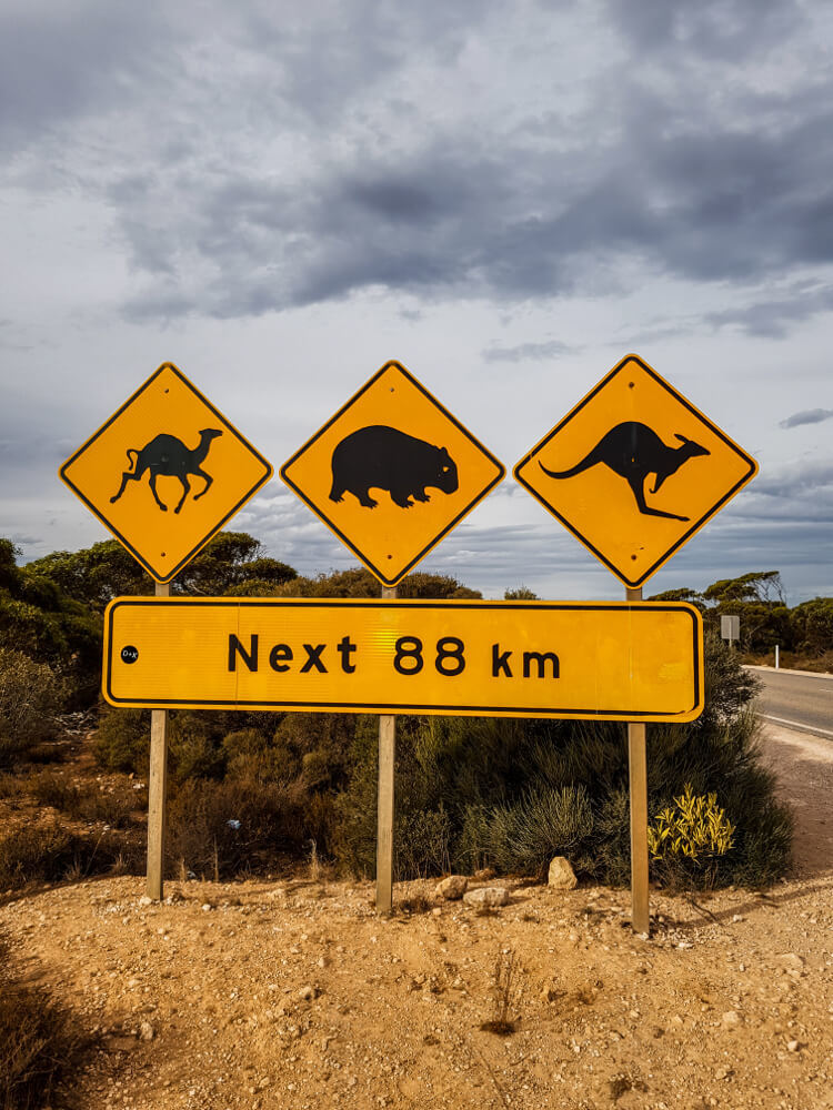 Panneaux d'Australie les trois big five
