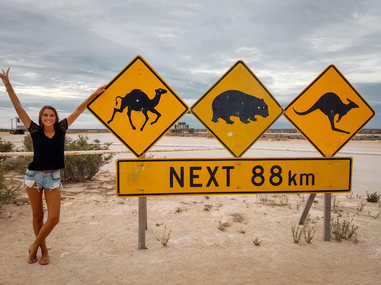 Panneaux d'Australie dromadaire wombat kangourou