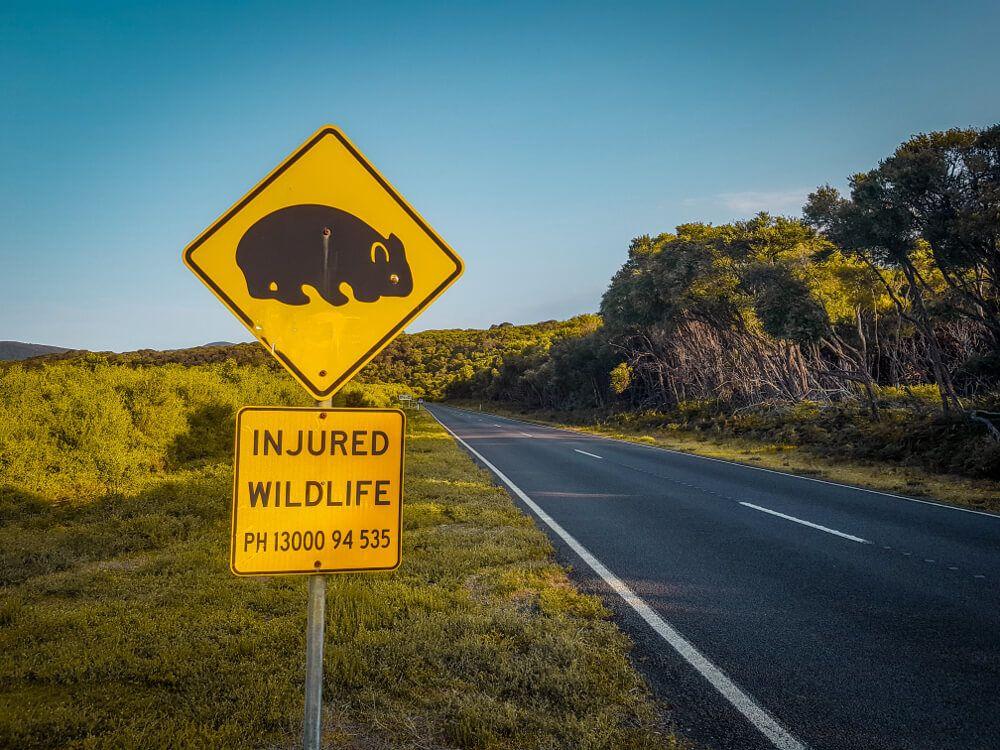 Panneaux d'Australie les wombats