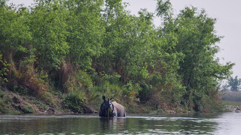 Voyage responsable - rencontre avec u rhinoceros en liberte - du soleil dans les poches - blog voyage